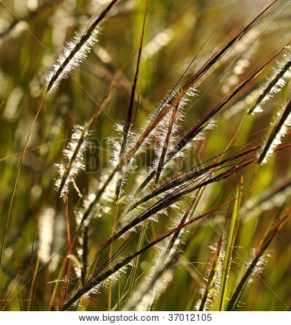Grass on Flower
