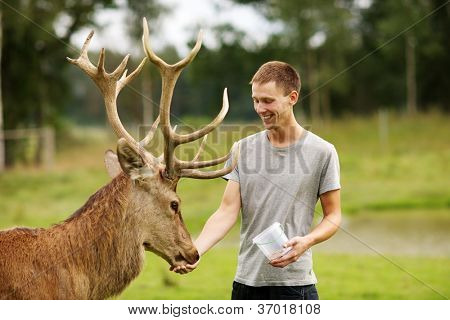 Man feeding deer