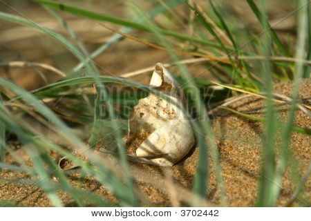 Sea Turtles Egg On The Beach