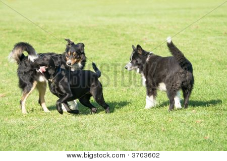 Three Black Dogs
