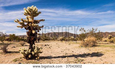 Jeolla Cactus Panorama de salto
