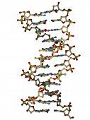 picture of double helix  - ball and stick rendering of a dna double helix molecule - JPG