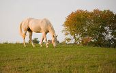 stock photo of white horse  - White horse atop a hill in autumn - JPG