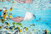 stock photo of stingray  - Colorful fish - JPG
