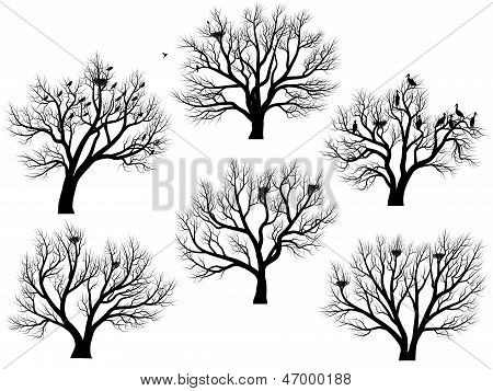 Silhouettes Of Birds Nest In Trees Without Leaves.