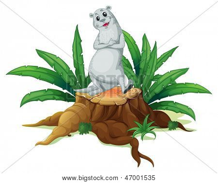 Illustration of a trunk with a sealion on a white background