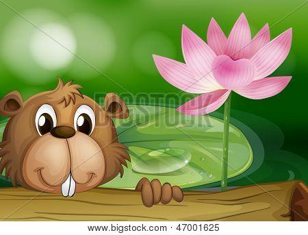 Illustration of a beaver beside a pink flower