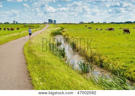 Jogger In A Cow Field