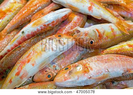 Fresh red mullet fish for sale