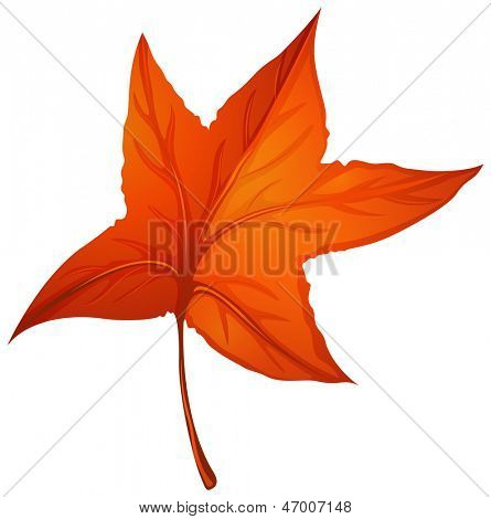 Illustration of a star-shaped autumn leaf on a white background