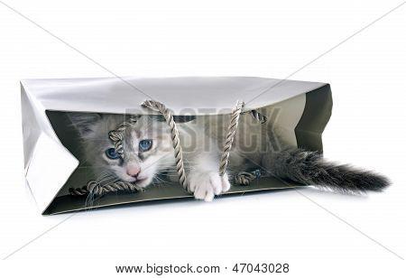 Birman Kitten In Craft