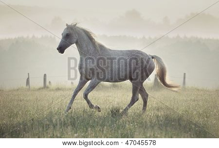 Wild horse in the sunrise
