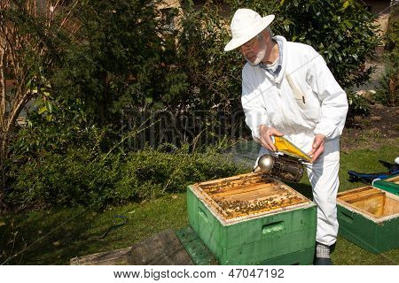 Beekeeper Applying Smoke To Bee Colony