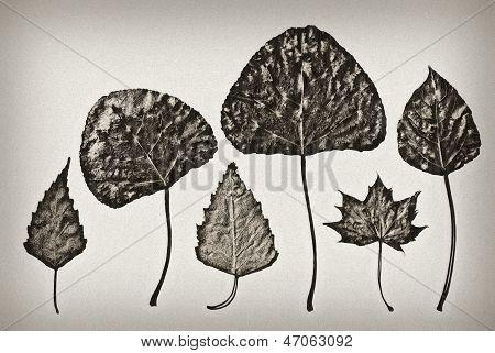 Old-fashioned herbarium background