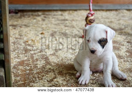 Lonely puppy