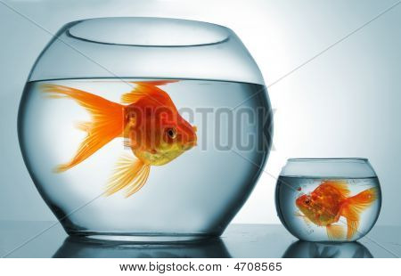 Golodfish Discrimination
