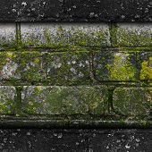 picture of fungus  - moss old green wall stone pattern mold gray texture background rock brick fungus - JPG