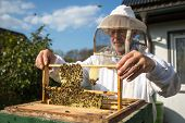 stock photo of beehives  - Beekeeper checking a beehive to ensure health of the bee colony or collecting honey - JPG