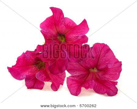 Three Pink Flowers