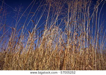 tall prairie grasses, Kansas