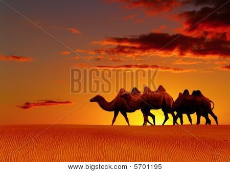 Desert Fantasy, Camels Walking