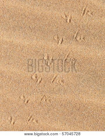 Lizard Tracks Across The Sand