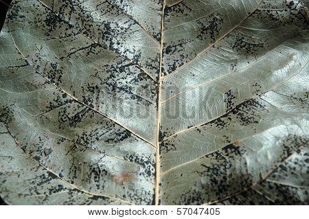 Bo Leaf Surface