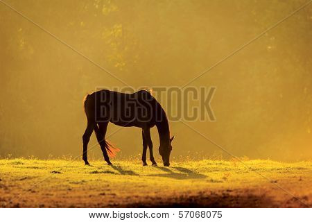 Horse In The Morning