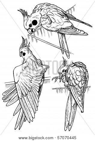 Parrots Three