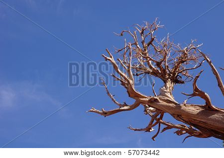 Old Dead Tree On The Sky