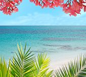 picture of oleander  - palm and flowers in a tropical beach - JPG