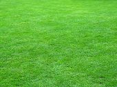 picture of football field  - Quality football grass field  - JPG