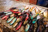 picture of gypsy  - Colorful beachside fish stall at the Sea Gypsy village in Rawai - JPG