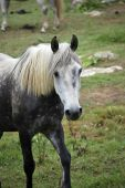 picture of horse face  - Portrait of one gray horse in the farm - JPG