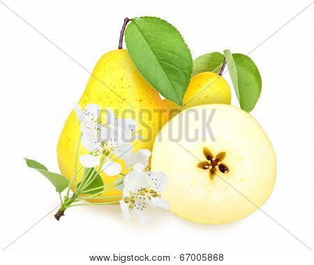 Fresh Yellow-orange Pears With Green Leaf