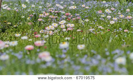 Small Meadow Flowers