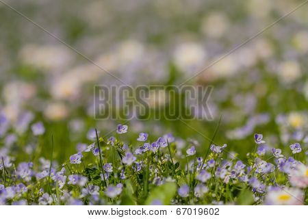 Many Small Meadow Flowers