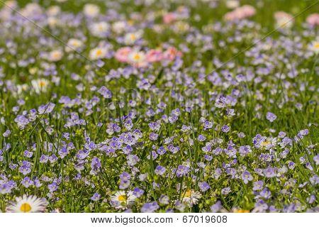 Nicel Meadow