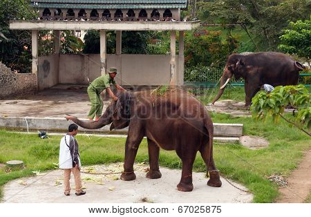 Mahout Is Climbs To Elephant In Zoo
