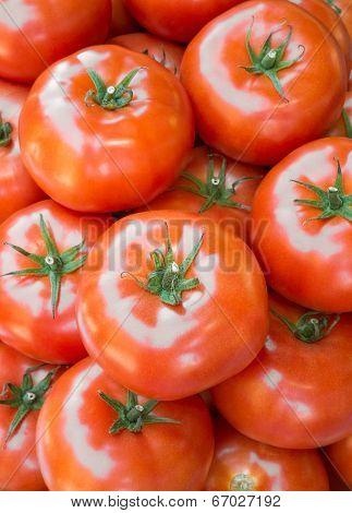 Ripe Tomatoes