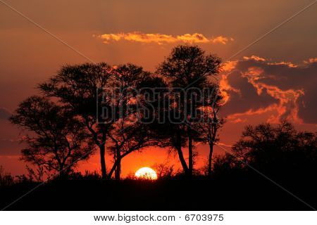 Savanna Sunset, Kruger National park, South Africa