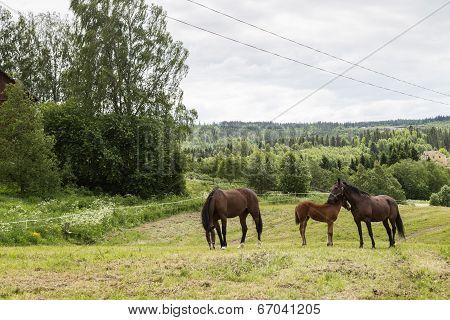 Calm Scenery With Horses