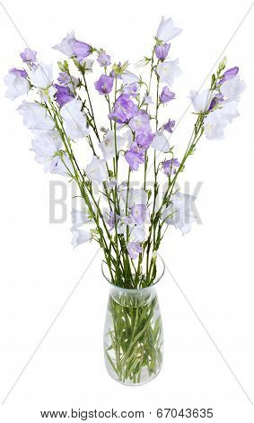 Bunch Of Campanula Bellflower In Glass Vase