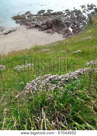 Beach Cliff Seascape And Flowers