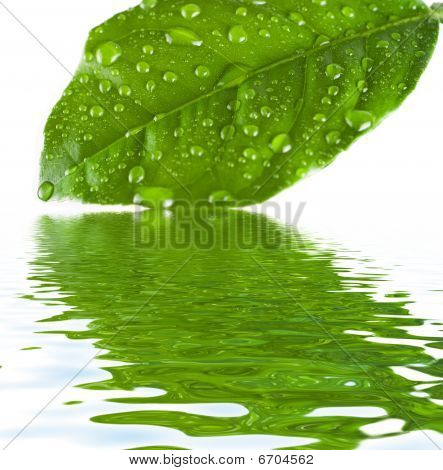 Green Leave