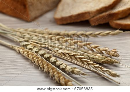 Dried spelt close up with peasant bread