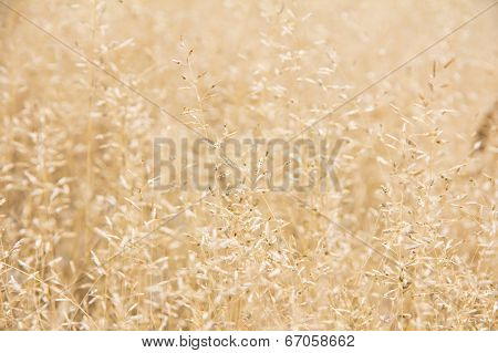 A flower of weed grass with sun light