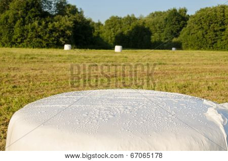 Polythene Wrapped Grass Straw Bales. Animal Fodder