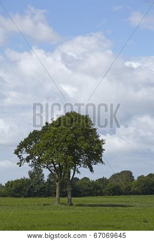 Landscape With Freestanding Tree On A Field