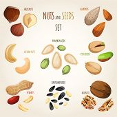 pic of mixed nut  - Nuts and seeds mix decorative elements set vector illustration - JPG